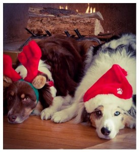 Merry Christmas from Urban Paws Doggy day care!