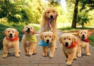 puppies-1
